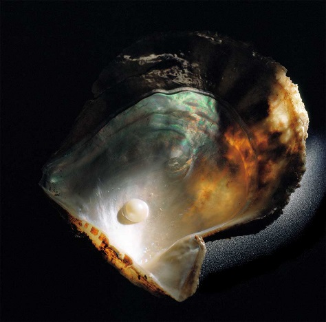 mikimoto-worlds-first-cultured-pearl