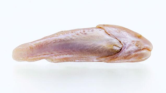 "Natural Freshwater ""Fish"" Pearl"